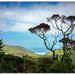 New Zealand Christmas Tree... by julzmaioro