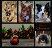 24th Dec 2019 - Christmas greeting