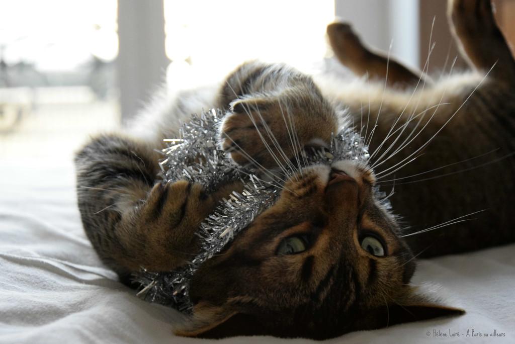 when your cat hates Christmas... by parisouailleurs