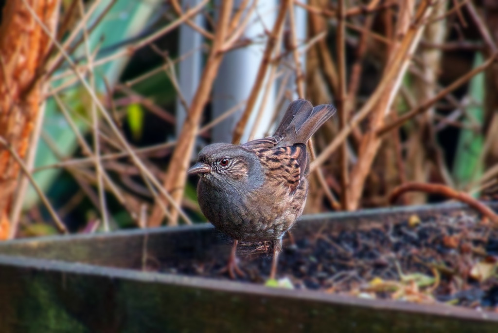 Bird On A Box. by tonygig