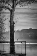 24th Dec 2019 - Heron in the mist