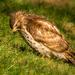 hawk by jernst1779