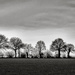 Tree-Line... by vignouse