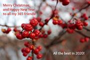 25th Dec 2019 - Merry Christmas! (2020)