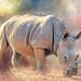 Rhinoceros  by ludwigsdiana