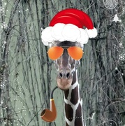 24th Dec 2019 - Christmas Eve  Giraffe