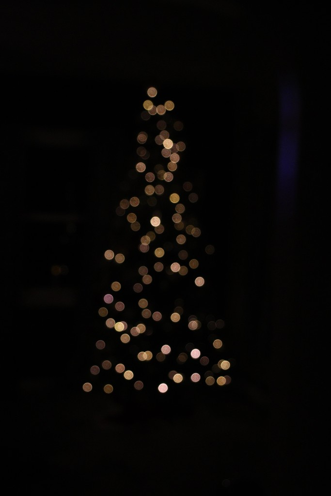 Day 360:  O Christmas Tree by sheilalorson
