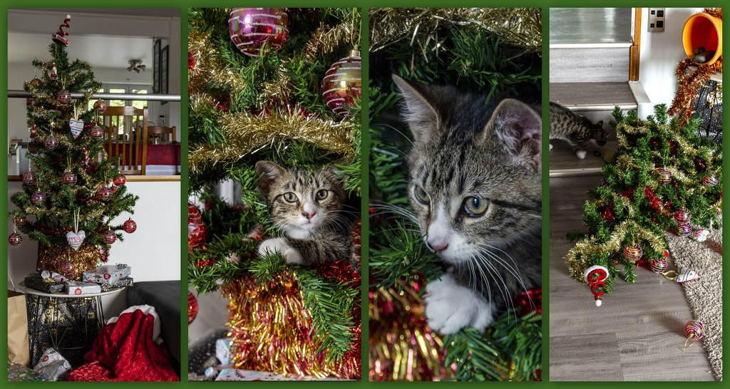 Christmas Trees and Kittens Don't Mix! by nickspicsnz