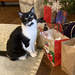 I've been good.  Where is my present?