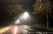 27th Dec 2019 - Peering through the fog
