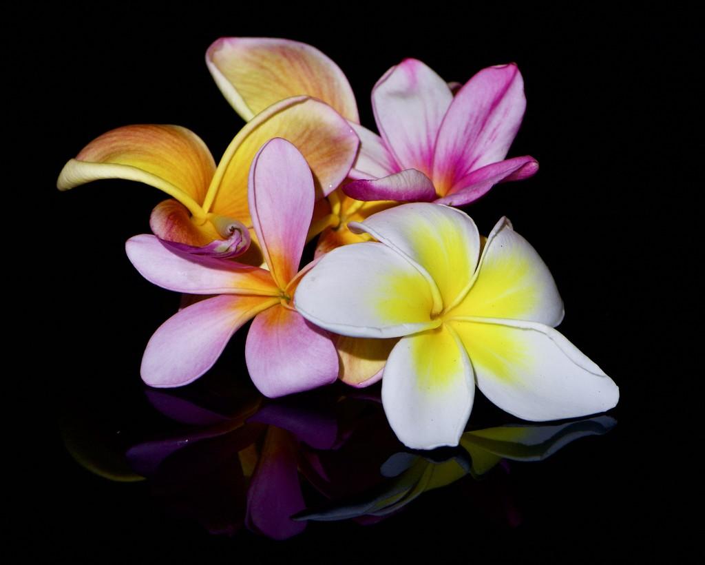 Fallen Flowers _DSC9415 by merrelyn