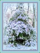 25th Dec 2019 - I'm Dreaming of a White Christmas