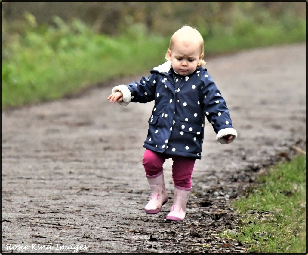 Out for a toddle by rosiekind