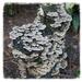 Fungi by gijsje