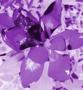 26th Dec 2019 - Purple flower patterns