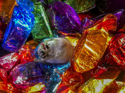 28th Dec 2019 - Cat in the candy