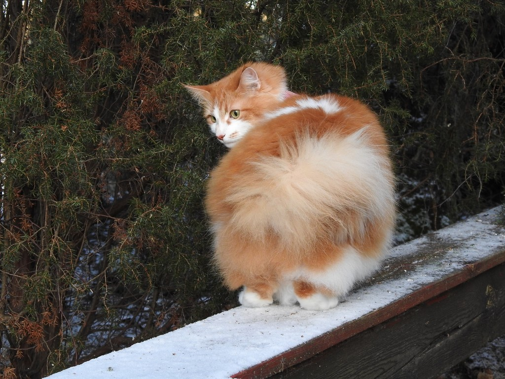 Fluffy tail by katriak