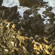 28th Dec 2019 - Sea Lions Basking In the Sun