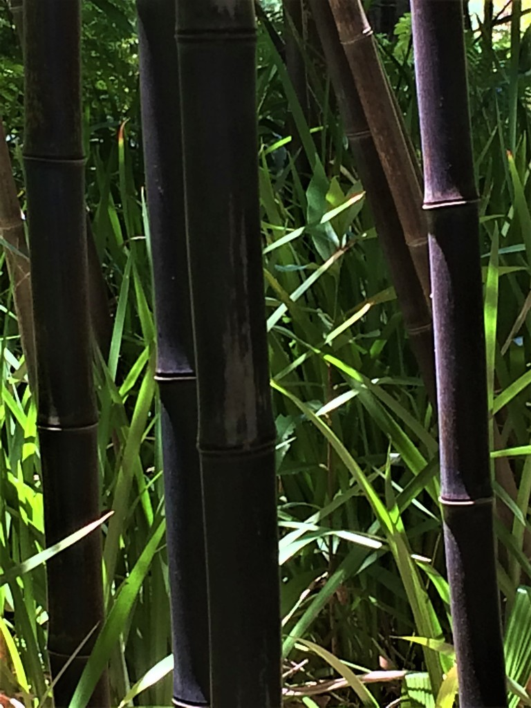 Bamboo by lmsa