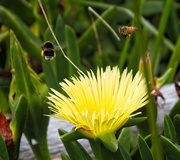 15th Dec 2019 - Busy bees