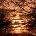 EXTRAS:  Sunset at Tiptree Heath by casablanca