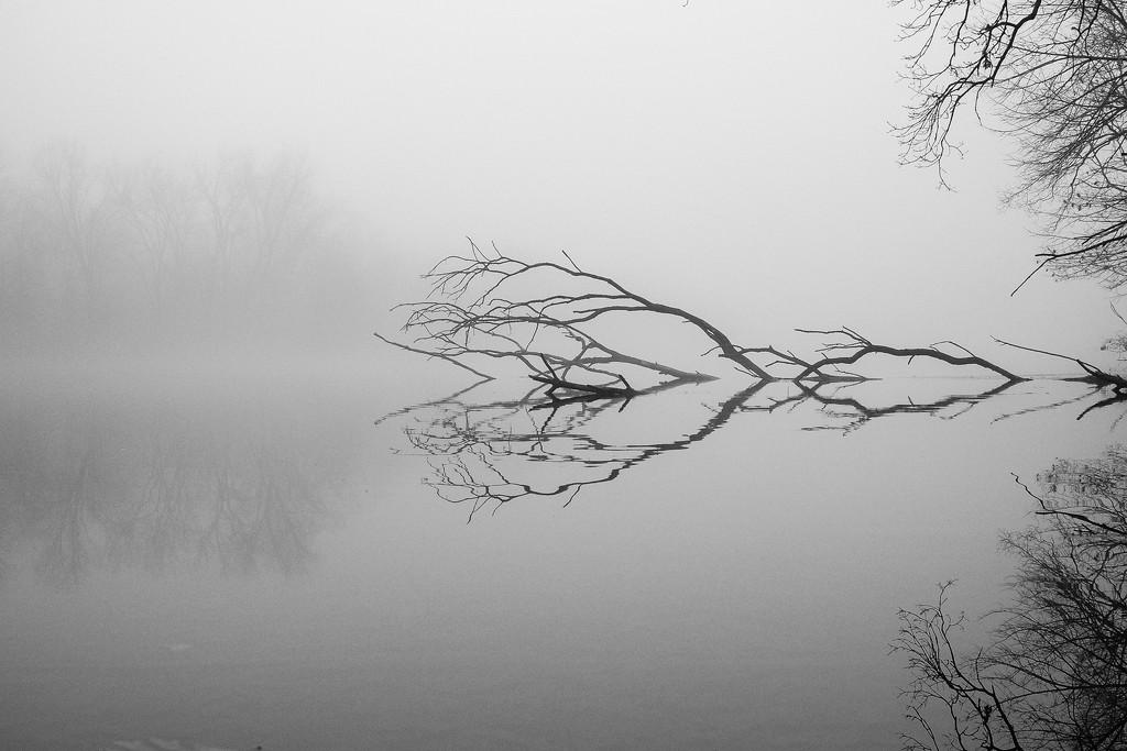 Foggy day by vera365
