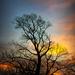 Sunrise by samae