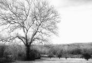 29th Dec 2019 - Sycamore Tree