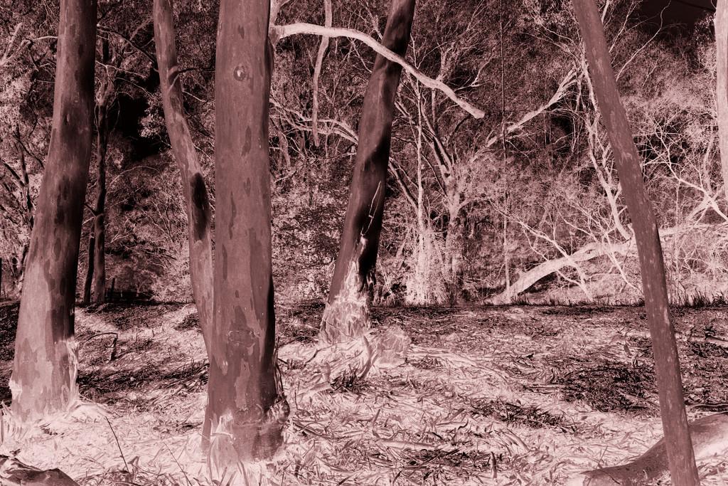 bush sadness  by fr1da