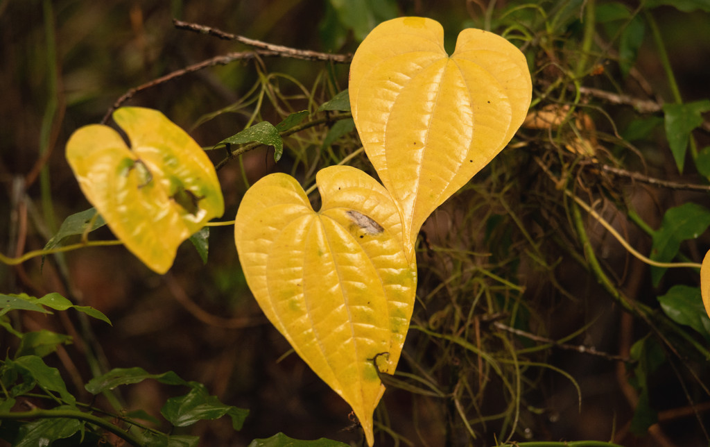 Heart Leaves! by rickster549