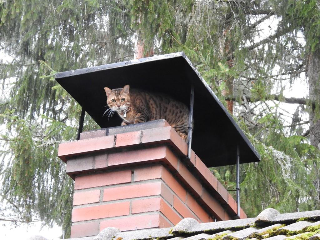 Chimney kitty by katriak