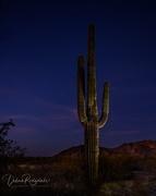 30th Dec 2019 - Playing around with night lighting and saguaros