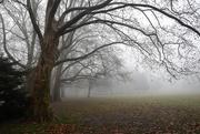 16th Dec 2019 - Foggy morning ...