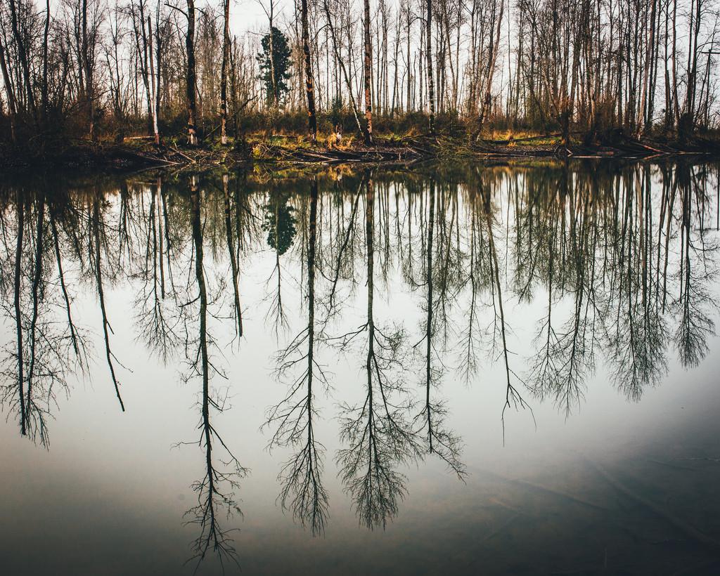 Reflections by mamazuzi