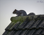 29th Dec 2019 - On lookout