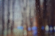 30th Dec 2019 - Rainy Day