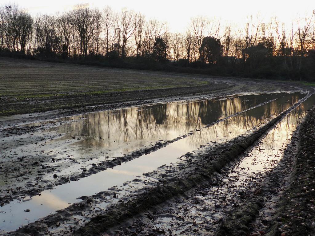 A muddy walk by judithdeacon