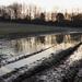 A muddy walk