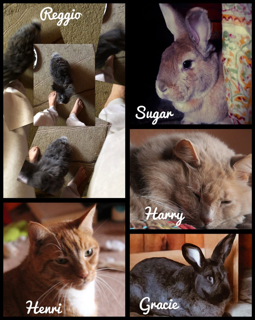 My Furry Family  by mzzhope