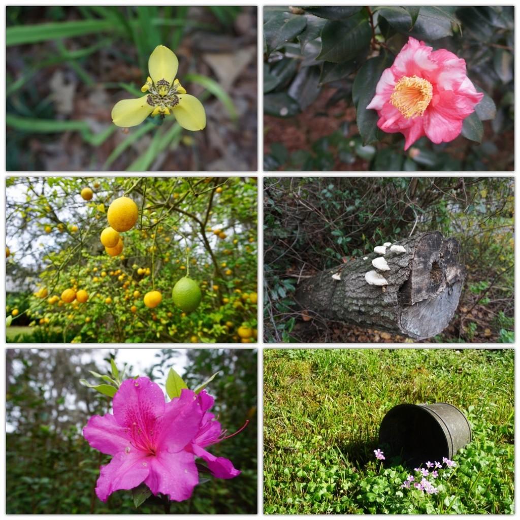 Florida Flora by allie912