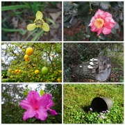 31st Dec 2019 - Florida Flora