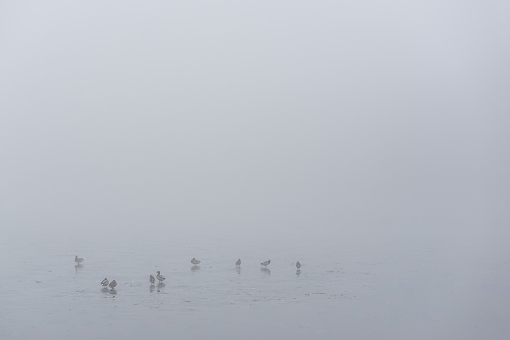 ducks in fog by jackies365