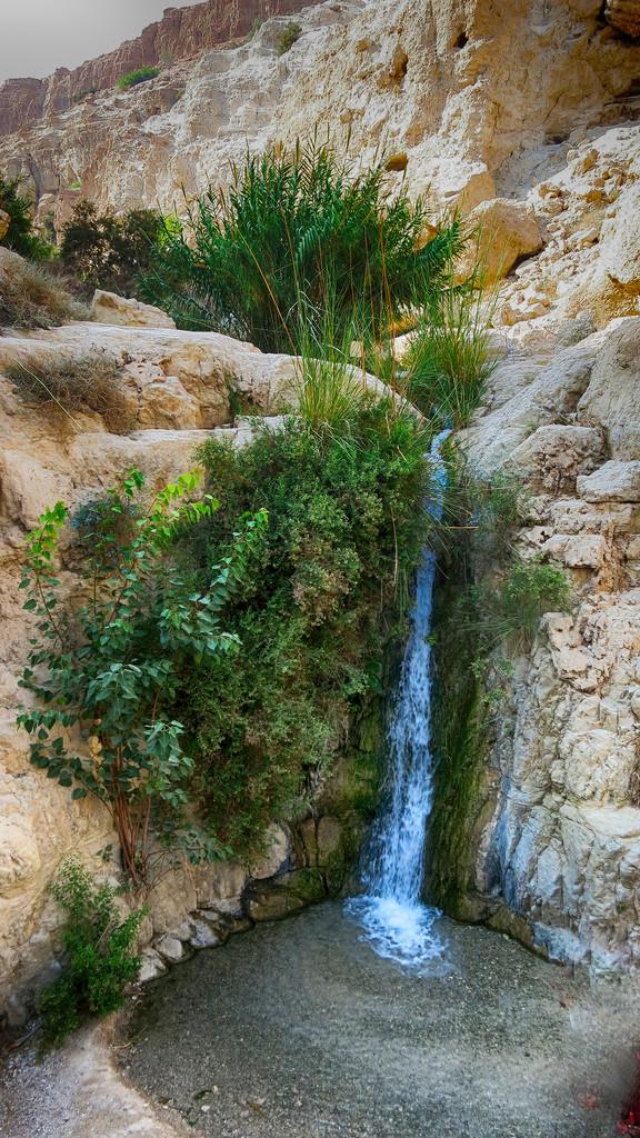 Ein Gedi Oasis - Israel by pdulis