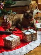 31st Dec 2019 - late Christmas