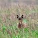 Hare's look at you kid. by stevejacob