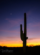 31st Dec 2019 - Last saguaro, I promise