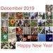 December 2019 by shutterbug49
