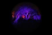 28th Dec 2019 - Morton Arboretum Illuminated Tree