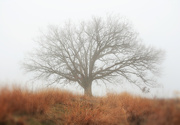 30th Dec 2019 - Ancient Oak