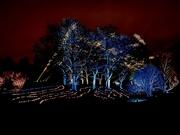 "30th Dec 2019 - Synchronized ""Dancing Lights"" at Morton Arboretum"